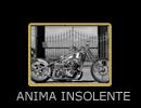 ANIMA INSOLENTE